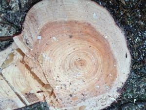 木肌からは、木の香りが