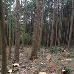 山の木が伐採されました