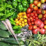 今年の夏野菜&いも掘り